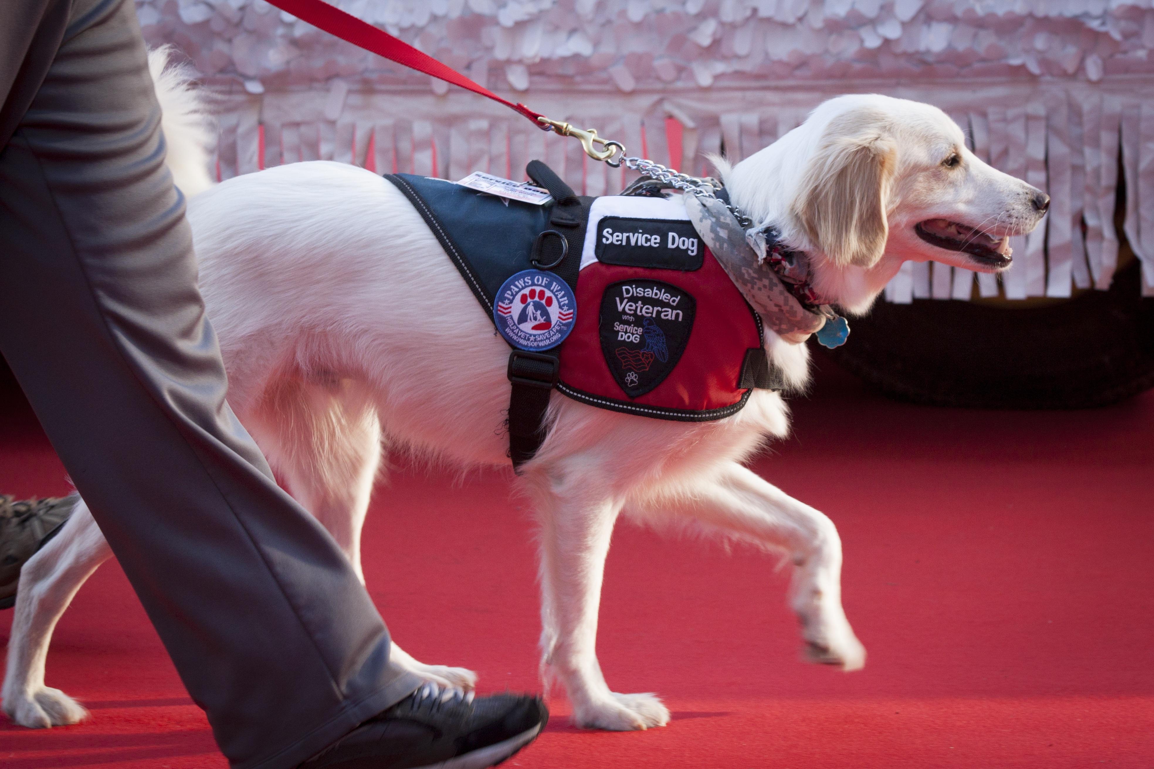 service dog1