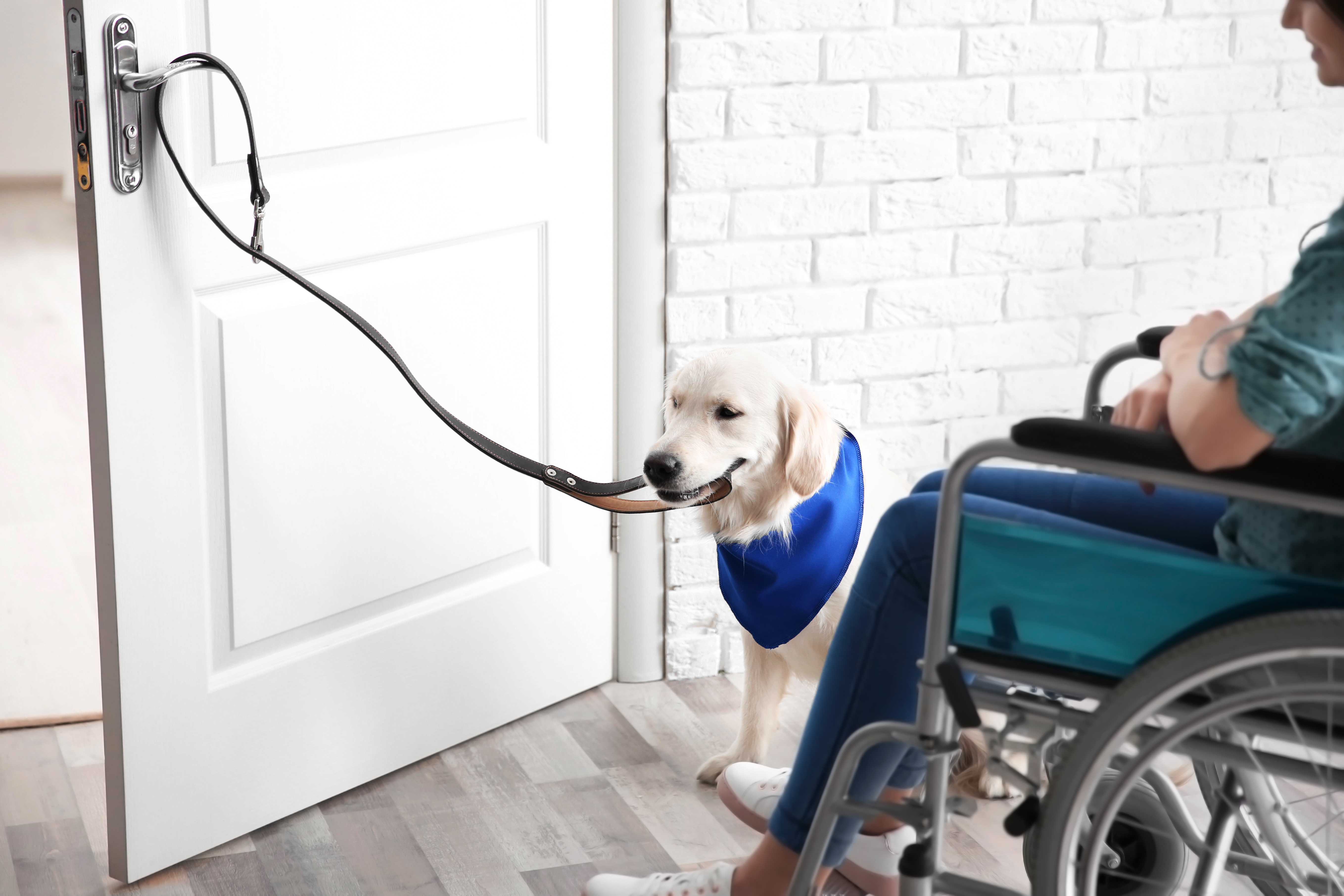 MOBILITY DOGS1