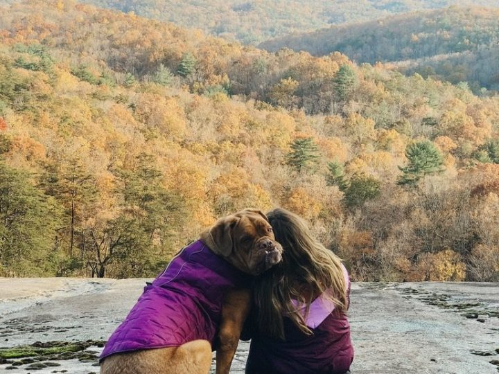 5 DC Hikes to do with your dog
