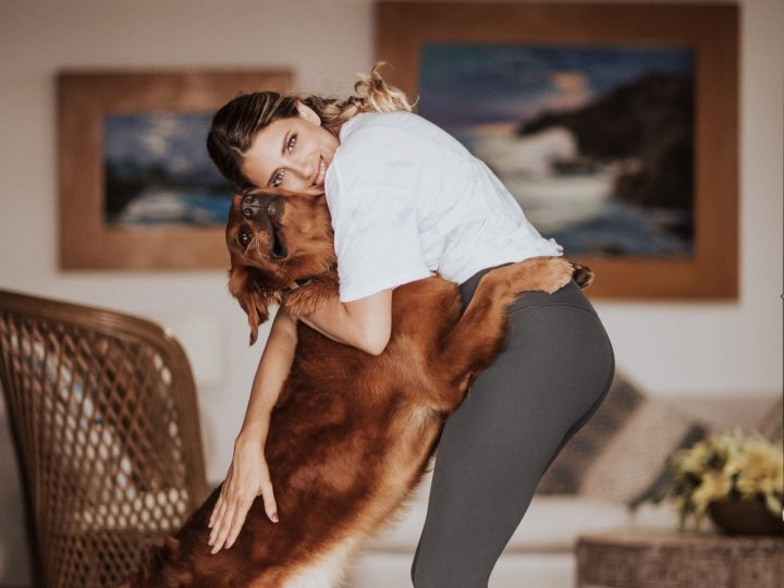 Qualities of a dog MAESTRO