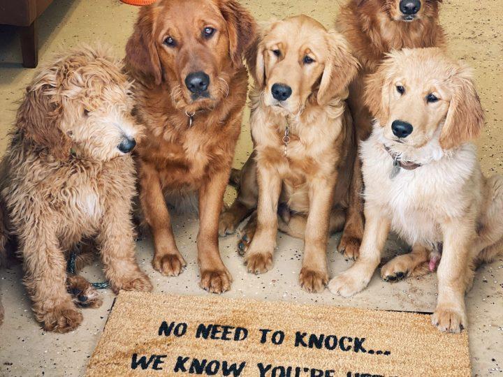 Super Puppies 101